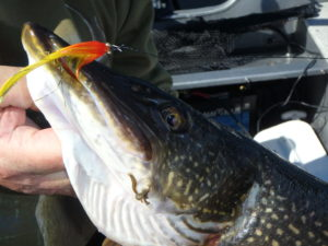 Fly in Pike Mouth