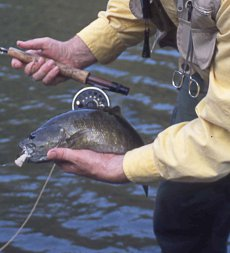 Shenk's Streamer is an excellent smallmouth bass fly for sight fishing.