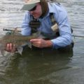 African Grayling (Labeo capensis)
