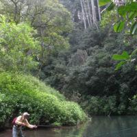 Working the Jungle Stream